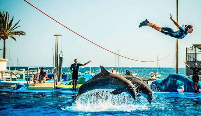 дельфинарий Marineland
