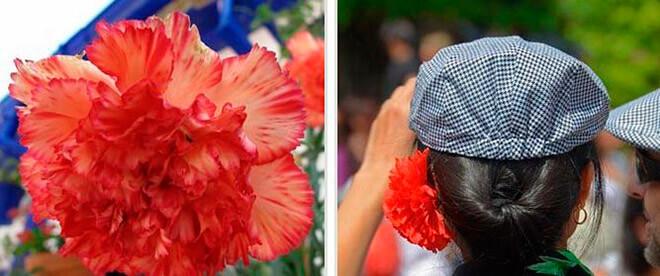 Гвоздика: цветок со смыслом