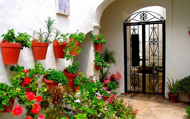 Цветы с испанским колоритом